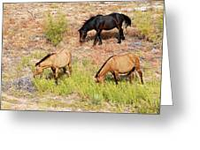 Mustangs Greeting Card
