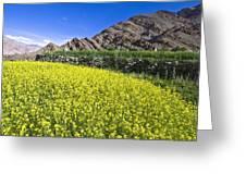 Mustard Field, Hemis, 2007 Greeting Card