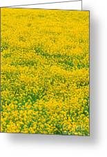 Mustard Flowers Greeting Card