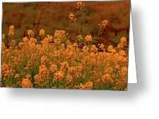 Mustard Garden Greeting Card