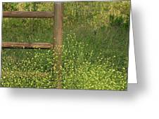 Mustard Grass And Fence At Entrance To Peters Canyon Greeting Card