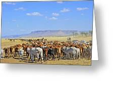 Mustering Passed The Cockburn Ranges Greeting Card