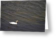 Mute Swan 1 Greeting Card