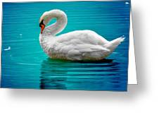 Mute Swan 4 Greeting Card