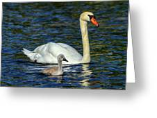 Mute Swan, Cygnus Olor, Mother And Baby Greeting Card