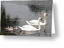 Mute Swan Family Day Two Greeting Card