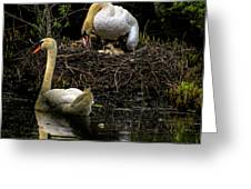 Mute Swan Family Greeting Card