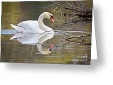 Mute Swan Glide II Greeting Card