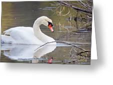 Mute Swan I Greeting Card