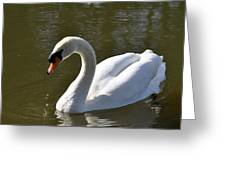 Mute Swan On Rolleston Pond Greeting Card