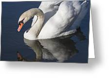 Mute Swan Reflected Greeting Card