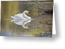 Mute Swan Reflection I Greeting Card