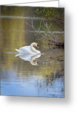 Mute Swan Reflection Greeting Card