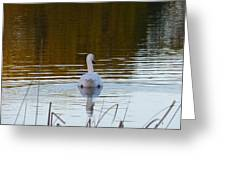 Mute Swan Swimming Away Greeting Card
