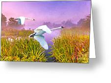 Mute Swans Over Marshes Greeting Card