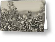 Muted Beauty 2 Greeting Card