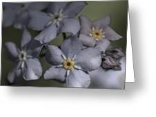 Muted Forget Me Not  Greeting Card
