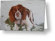 Muttley-the Best Springer Spaniel Greeting Card