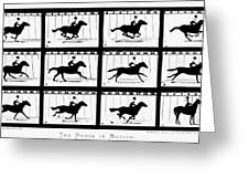 Muybridge: Horse Greeting Card