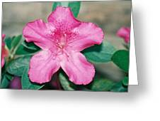 My Azalea Greeting Card