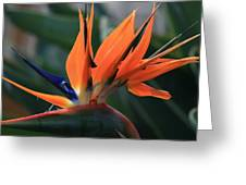 My Bird Of Paradise Greeting Card by Valia Bradshaw