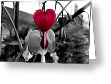 My Bleeding Heart Greeting Card