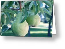 My Brothers Pear Tree Greeting Card