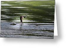 Cormorant - My Catch For The Day Greeting Card