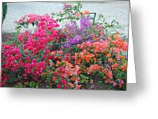 My Colorful Bouganville Greeting Card