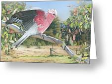My Country - Galah Greeting Card