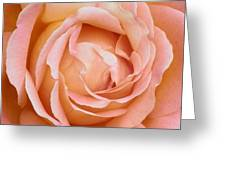 My Daily Rose Greeting Card
