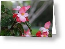 My English Garden 8 Greeting Card