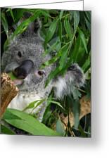My Eucalyptus Greeting Card