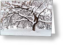 My Favorite Tree In The Snow Greeting Card