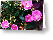 My First Rose Bush Greeting Card