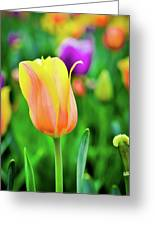 My First Tulip Greeting Card