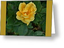 My First Yellow Rose Greeting Card