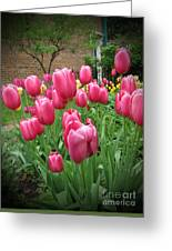 My Focus Was On The Tulips Greeting Card