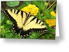 My Garden Visitor Greeting Card