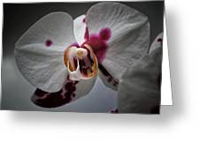 My Growling Dragon Orchid. Greeting Card