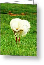 My Heart Baby Ostrich  Greeting Card