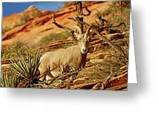 My Home You Can Go Now 7309 Greeting Card