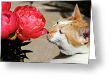 My Kitty In Love With A Peony Greeting Card