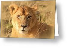 My Lion Eyes Greeting Card
