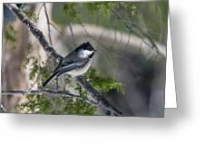 My Little Chickadee II Greeting Card