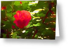 My Love Is Like  A Red Red Rose Of Sharon Greeting Card
