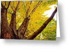 My Maple Tree Greeting Card