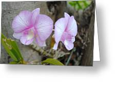 My Orchid # 15 Greeting Card