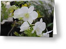 My Orchids # 10 Greeting Card