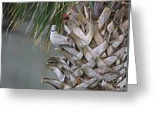 My Own Palm Tree Greeting Card